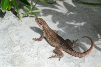 The Bahamas is also full of cool tropical animals!